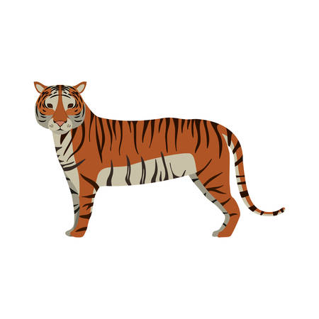 tiger wildlife and jungle animal over white background. vector illustration