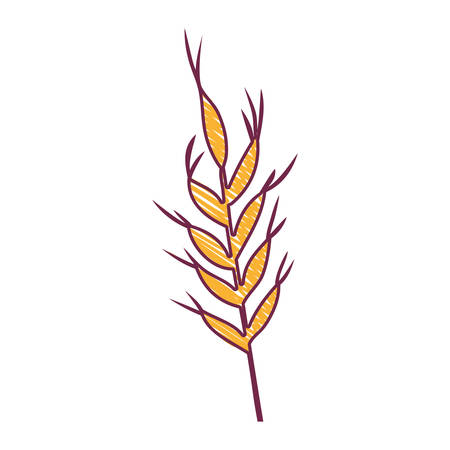 ears of wheat barley icon over white background. draw design. vector illustration