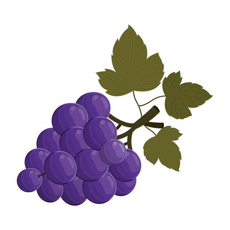 market gardening: bunch of grapes fruit healthy food over white background. vector illustration