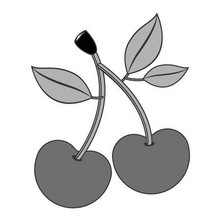 market gardening: cherry fruit healthy food over white background. vector illustration