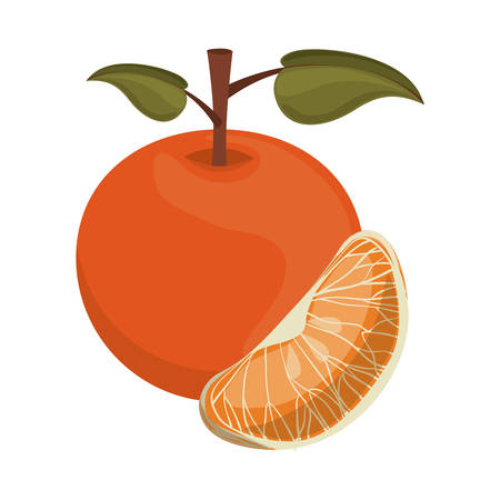 market gardening: tangerine fruit icon over white background. healthy and natural food design. vector illustration