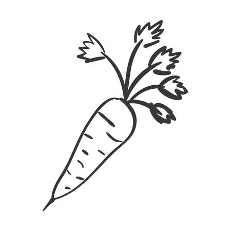 carrot vegetable icon. healthy food design. vector illustration