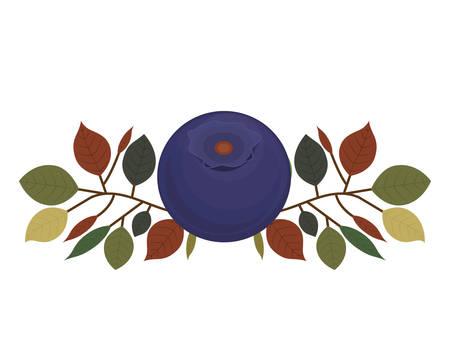 branch with big purple blueberry vector illustration Illustration