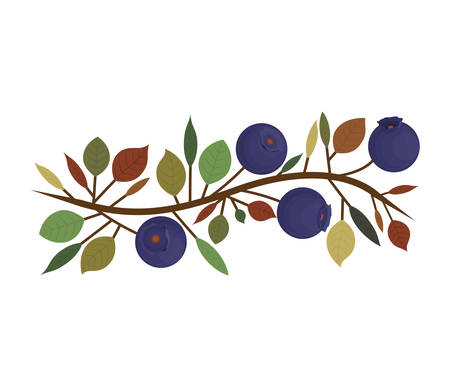 blueberries: branch with purple natural blueberries vector illustration Illustration