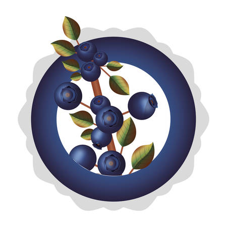 dish with blueberries branch thick stalk vector illustration