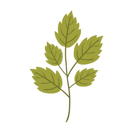 Silhouette toothed leaves with ramifications vector illustration Illustration