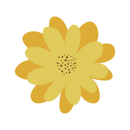 yellow petals of flower with pistils vector illustration