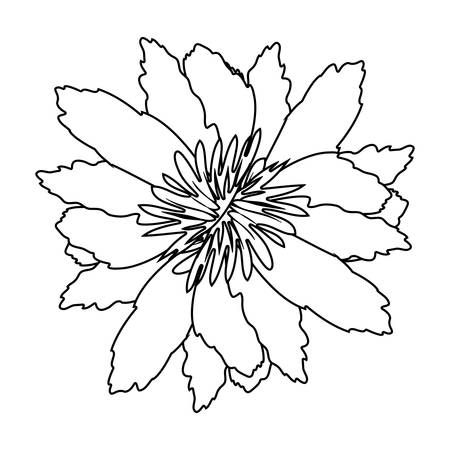 ramification: silhouette petals of flower with sepal vector illustration