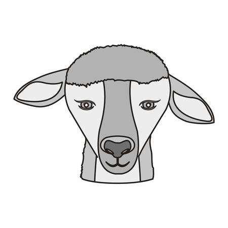 face of lamb animal over white background. vector illustration