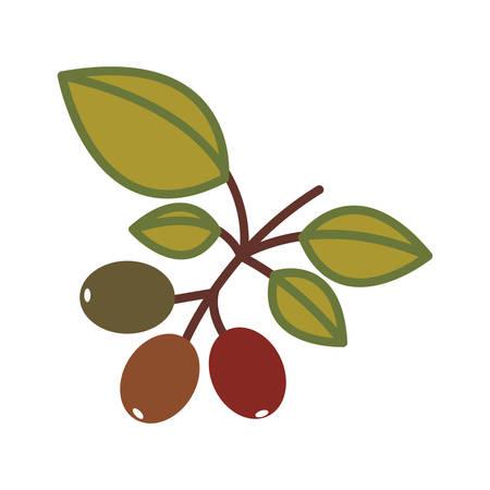 planta de cafe: planta de café con hojas verdes sobre fondo blanco. ilustración vectorial