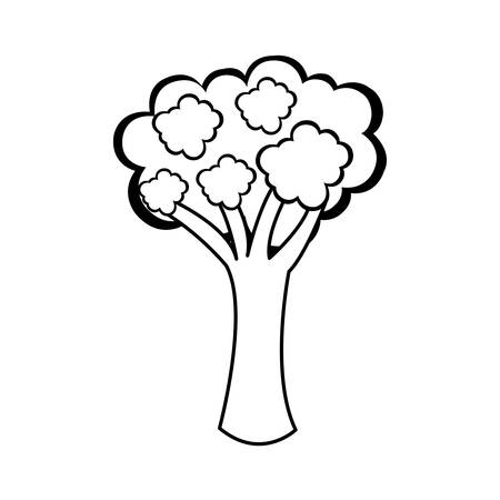broccoli vegetable icon image vector illustration design