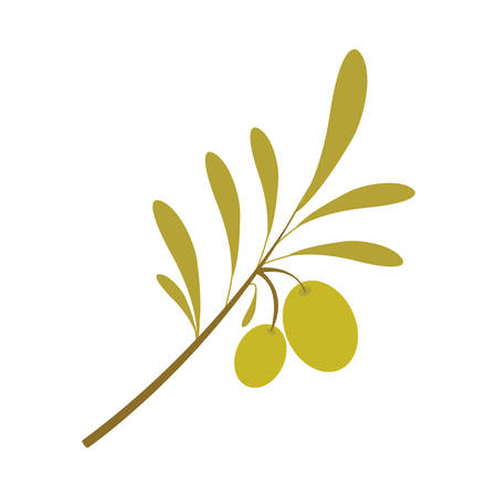 olive plant food fruit oil organic natural vector isolated illustration