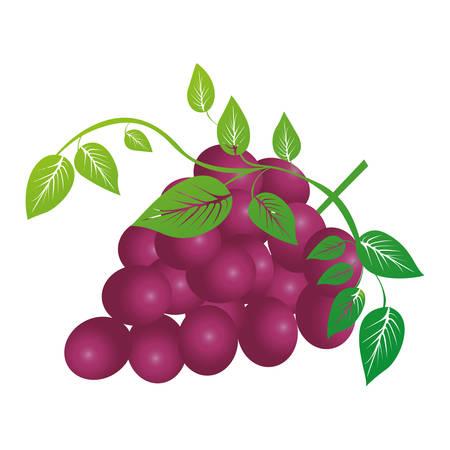 market gardening: grapes bunch icon image vector illustration design