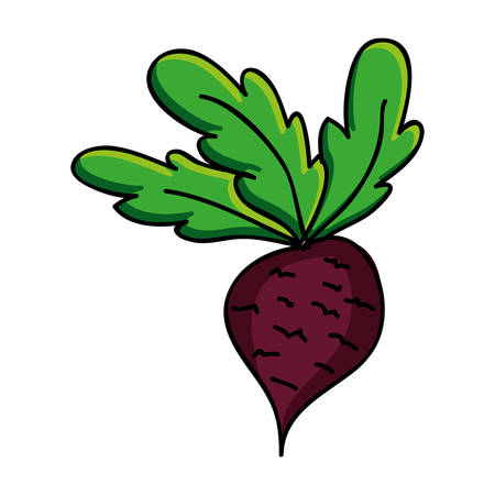 radish vegetable icon image vector illustration design