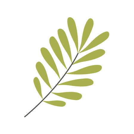 bough: Green leaves Silhouette with ramifications vector illustration