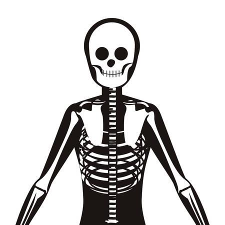 vertebrae: half body silhouette system bone with vertebrae vector illustration