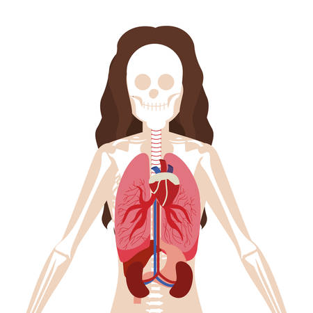 half body woman with inner organs and bones vector illustration Vettoriali