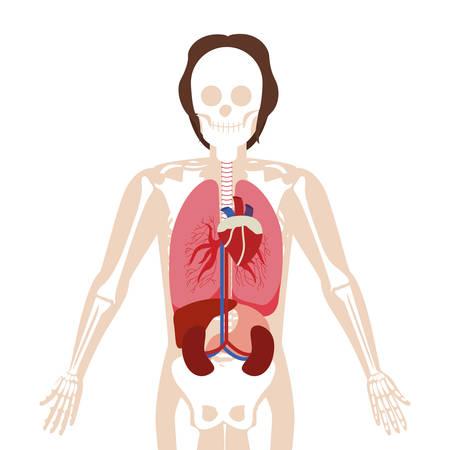 half body man with inner organs and bones vector illustration