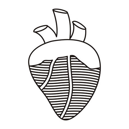 tricuspid valve: contour heart with valves and veins vector illustration