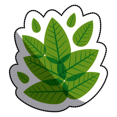 floral decoration: Leaf icon. Plant floral nature and decoration theme. Isolated design. Vector illustration