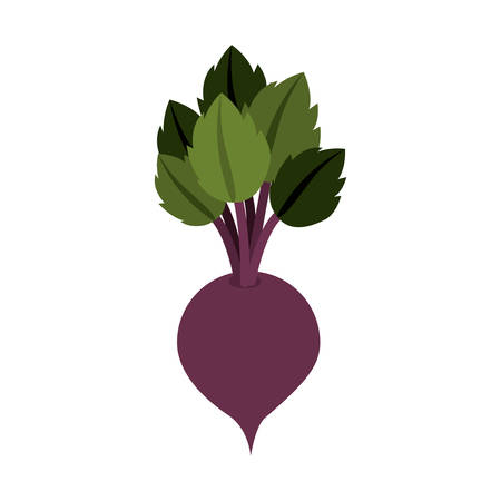 veg: silhouette colorful with beet vegetable vector illustration