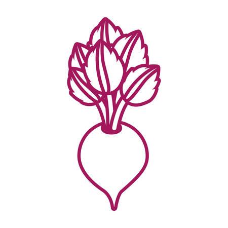 Kontur lila Linie mit Zuckerrüben Vektor-Illustration