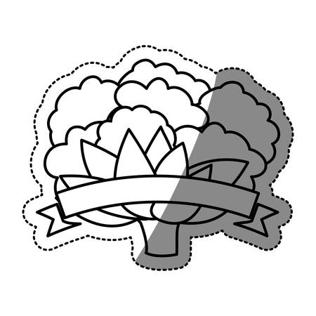 cauliflower: Cauliflower icon. Organic healthy and fresh food theme. Isolated design. Vector illustration Illustration