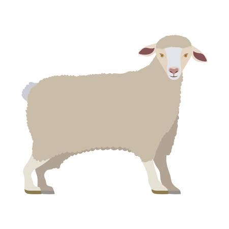 cartoon funny of sheep posing vector illustration Illustration