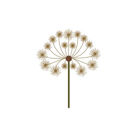 colorful dandelion with stem and pistil vector illustration Illustration