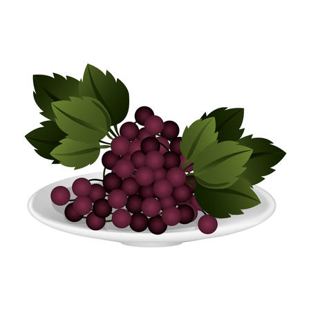 Delicious grapes fruits vector illustration graphic design