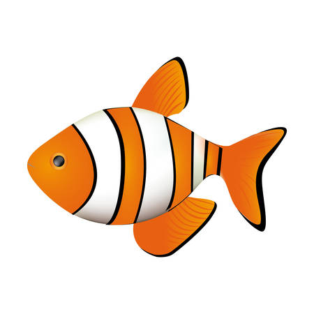 colorful picture clownfish acuatic animal vector illustration Illustration