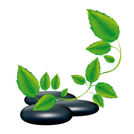 spa therapy lava stones and creeper plant vector illustration