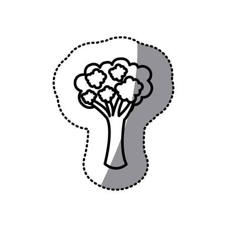 figure vegetable broccoli icon, vector illustraction design image