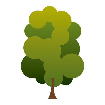 colorful silhouette green tree with several crown leaves vector illustration Illustration