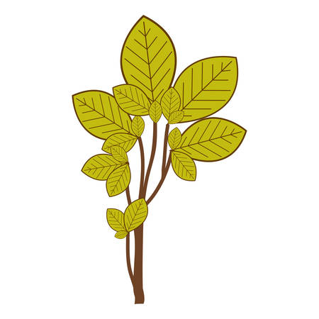 ramifications with green leaves nature icon vector illustration Illustration