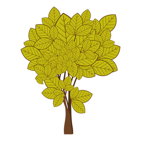 green leafy tree with ramifications nature icon vector illustration
