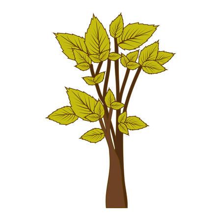 arboles frondosos: Ilustración de vector de árbol verde frondoso bosque icono Vectores