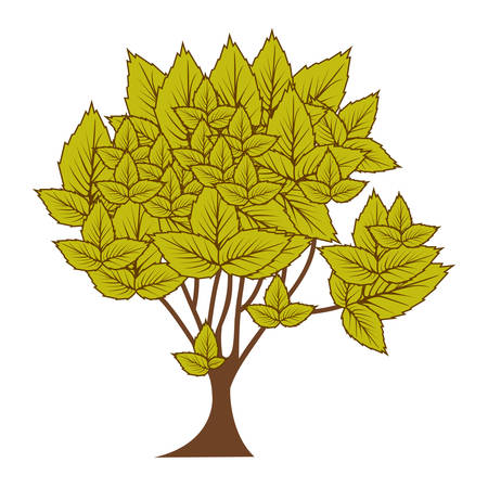 green leafy tree with several leaves vector illustration