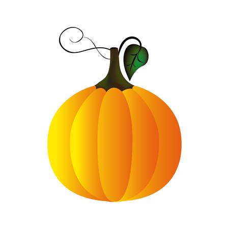 colorful pumpkin vegetable halloween icon vector illustration
