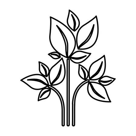 silhouette of plant with branch and leafs vector illustration Illustration