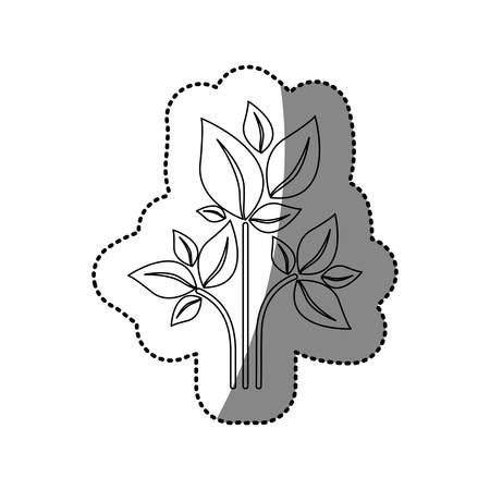 sticker silhouette of plant with branch and leafs vector illustration Illustration
