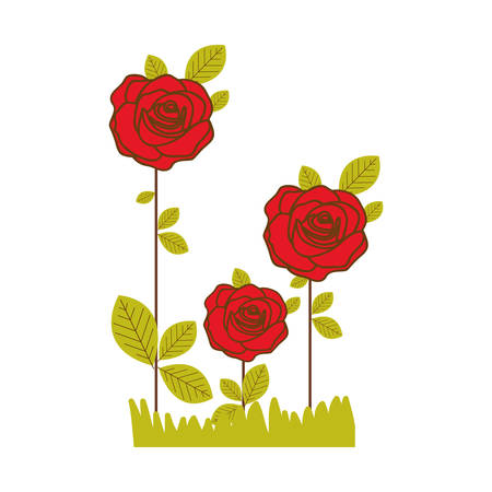 Colorful realistic red roses planted with leaves and pasture vector illustration