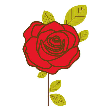 colorful flowered red rose with leaves and stem vector illustration Illustration