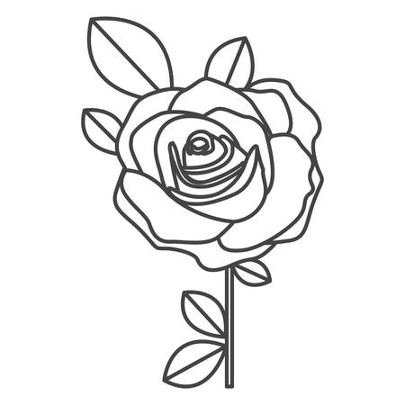 silhouette sketch flowered rose with leaves and stem vector illustration