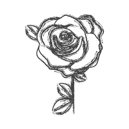 flowered: blurred silhouette sketch flowered rose with leaves and stem vector illustration