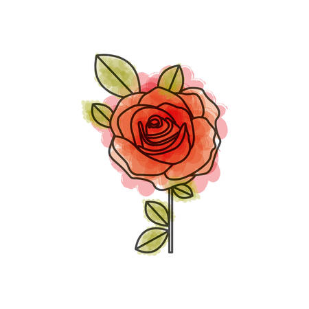 watercolor drawing of flowered red rose with leaves and stem vector illustration
