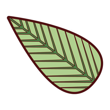 colorful thick silhouette of tree leaf vector illustration