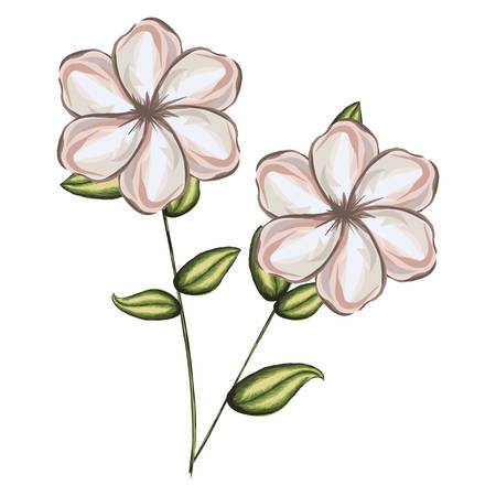 pistil: A watercolor silhouette with pair of malva flowers vector illustration Illustration
