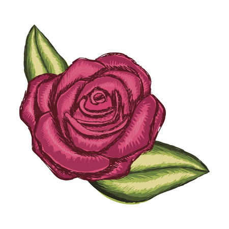 Colorful realistic flowered rose and leaves vector illustration