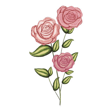 A colorful realistic flowered roses with leaves and stem vector illustration Illustration